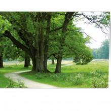 Bomen + Pad