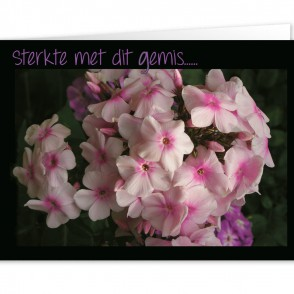 Anam-Design-Sterkte4VOORKANTTemplForWeb
